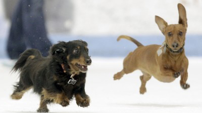 Cincinnati Cyclones Pucks & Pups